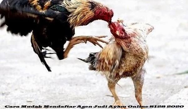 Cara Mudah Mendaftar Agen Judi Ayam Online S128 2020